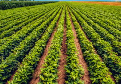 Como o Brasil bateu recorde de produção sem aumentar a área cultivada.